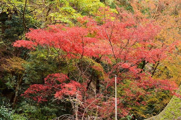 由岐神社脇の紅葉
