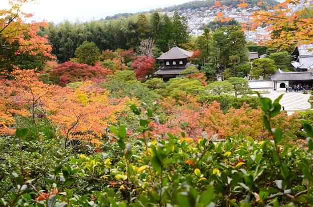 紅葉の中の銀閣寺