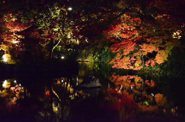 池に映るライトアップ