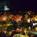 写真: ライトアップされた永観堂