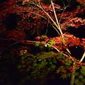 写真: 赤と緑と