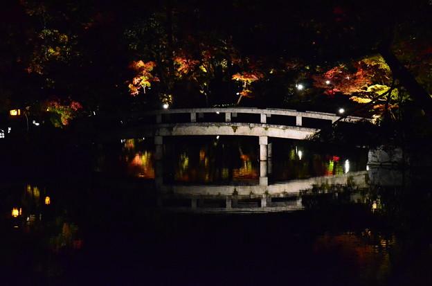 ライトアップされた池