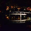 写真: ライトアップされた池