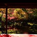 写真: 圓光寺・十牛の庭
