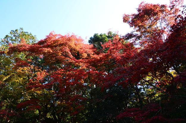 庭園東側の紅葉