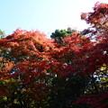 Photos: 庭園東側の紅葉