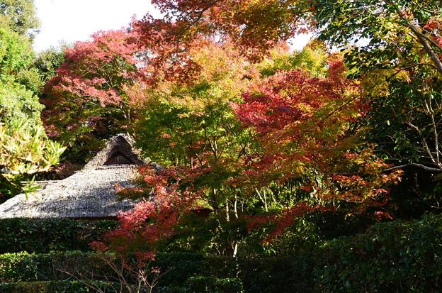 紅葉に包まれる芭蕉庵