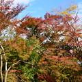 写真: 山茶花と紅葉