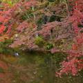 写真: 色づき始めた西池