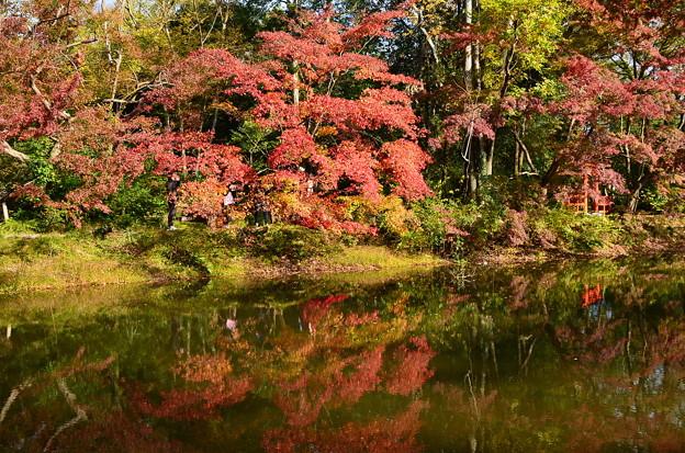 府立植物園の紅葉