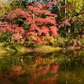 Photos: 府立植物園の紅葉