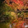 秋の府立植物園