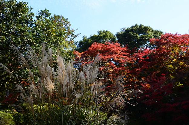 紅葉と薄の詩仙堂
