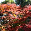 写真: 秋色の競演
