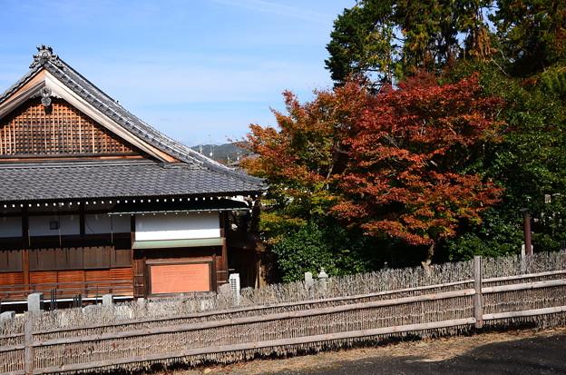 西園寺脇の紅葉