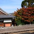 Photos: 西園寺脇の紅葉
