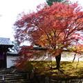 写真: 門脇の紅葉