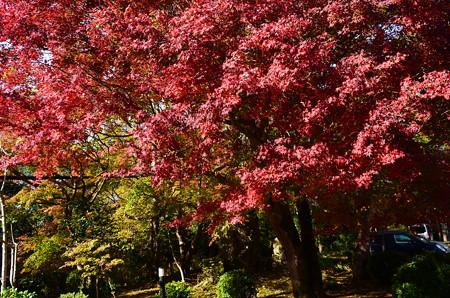 関西セミナーハウスの紅葉