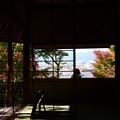 芭蕉庵越しの秋