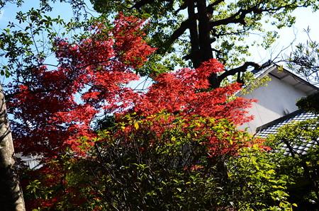 奥庭の紅葉