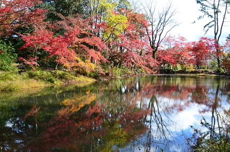 府立植物園の秋彩