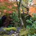 亀石と紅葉