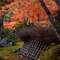 宝厳院の紅葉景色