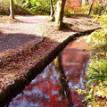 秋彩の小川