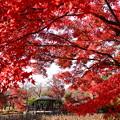 東屋を包む紅葉