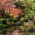 琵琶湖の色づき