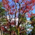 泉川亭の紅葉