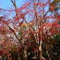 初冬の紅葉