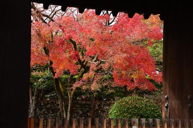 長得院の紅葉
