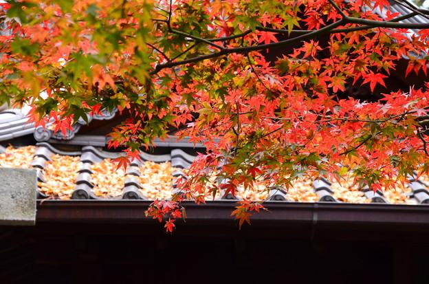 白雲神社の紅葉景色