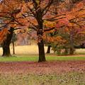 写真: 初冬の京都御苑