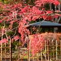 写真: 梅林奥の紅葉
