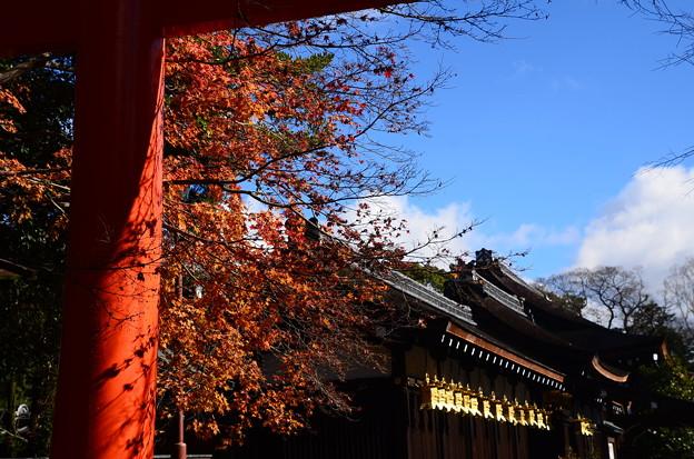 冬の日の紅葉