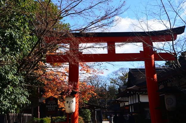 名残紅葉の下鴨神社