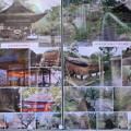 Photos: 台風の被害