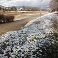 Photos: うっすら雪の賀茂川