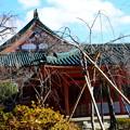 冬の平安神宮