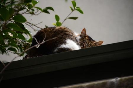 宗像神社の猫ちゃん