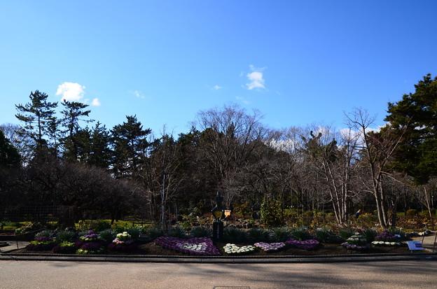 冬晴れの府立植物園