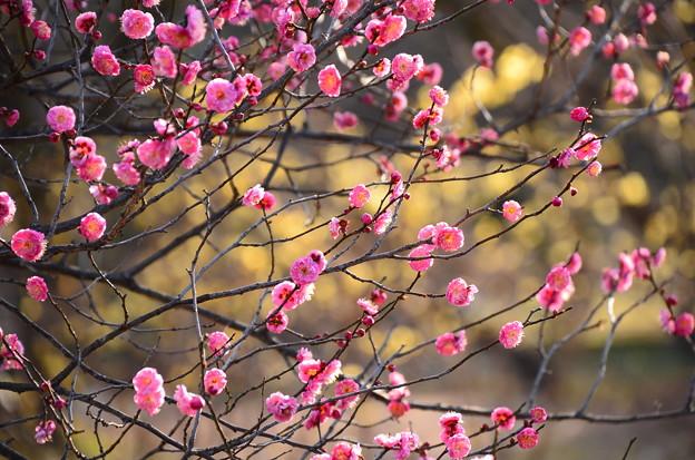 春うらら~~~