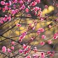 写真: 春うらら~~~