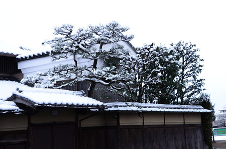 京の雪景色