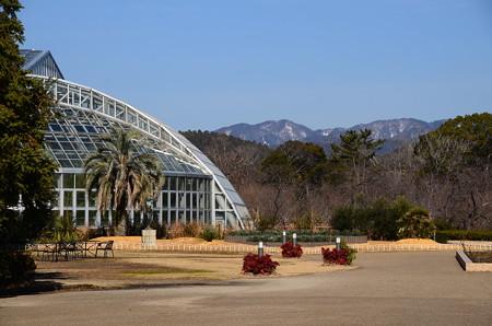 1月の府立植物園