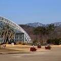 Photos: 1月の府立植物園
