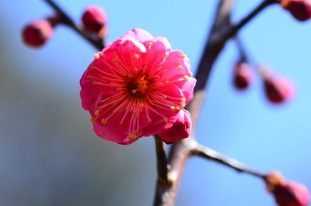 鹿児島(カゴシマ)