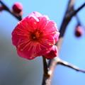 Photos: 鹿児島(カゴシマ)